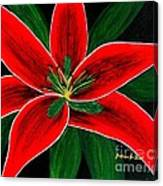Red Oriental Lily Canvas Print