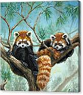 Red Pandas Canvas Print