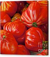 Red Pear Franchi Canvas Print