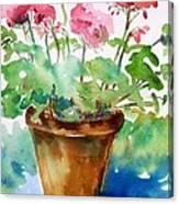 Red Pelargonium  Canvas Print