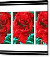 Red Peony Triptych Canvas Print
