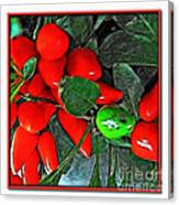 Red Pepper Plant Canvas Print