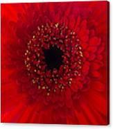 Red Petal Macro 3 Canvas Print
