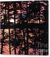 Red Pines Canvas Print