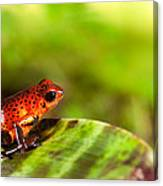 Red Poison Dart Frog Canvas Print