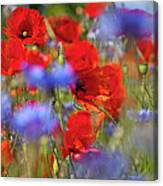Red Poppies In The Maedow Canvas Print