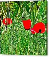 Red Poppies Near Meryem Ana Evi-cottage Believed To Be Mary's Last Home-turkey Canvas Print