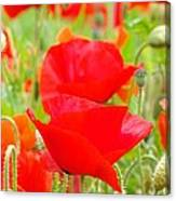 Red Poppy Flowers Art Prints Floral Canvas Print