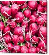 Red Radishes  Canvas Print