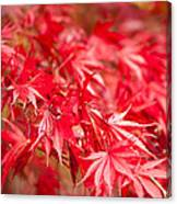 Red Red Red Canvas Print