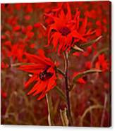 Red Red Wild Flowers Canvas Print