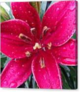 Red Refreshed Lily Canvas Print