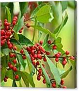 Red Ripe Berries Canvas Print