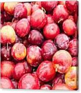 Red Ripe Plums Canvas Print