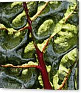 Red River Through Green Hills Canvas Print
