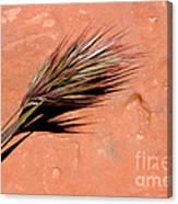 Red Rock In Arizona Canvas Print