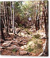 Red Rock Pine Forest Canvas Print