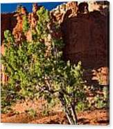 Red Rocks And Tree 1 Canvas Print