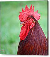 Red Rooster Portrait Canvas Print
