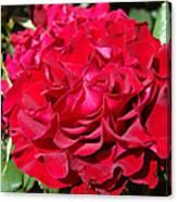 Red Rose Art Prints Big Roses Floral Canvas Print