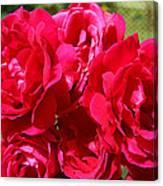 Red Rose Garden Art Prints Roses Canvas Print