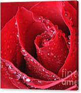 Red Rose Macro With Waterdrops Canvas Print