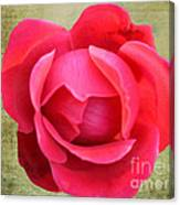 Red Rose Of Love Canvas Print