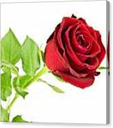 Red Rose On White Canvas Print