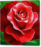 Red Rose Radiance Canvas Print