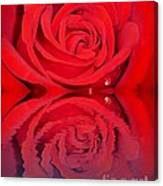Red Rose Reflects Canvas Print