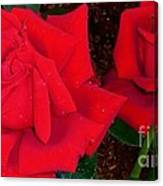 Red Rose Twins  Canvas Print