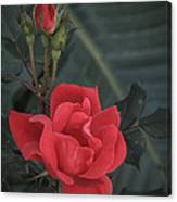 Red Rose With Bud Canvas Print