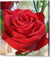 Red Rose With Garden Background  Canvas Print