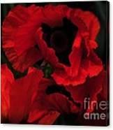 Red Ruffles Canvas Print