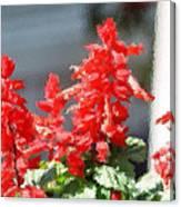 Red Salvia Brush Strokes Canvas Print