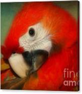Red Scarlet   Macaw Parrot Sammy Canvas Print