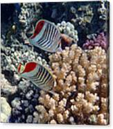 Red Sea Beauty 5 Canvas Print