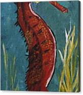 Red Seahorse - Sold Canvas Print