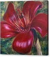 Red Silk Cotten Bombex Canvas Print