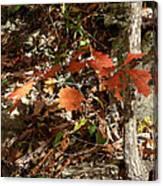 Red Sparkle Canvas Print