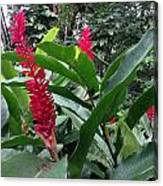 Red Spikes In St Lucia Canvas Print
