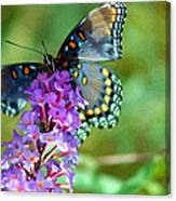 Red Spotted Purple Butterfly Photopainting Canvas Print