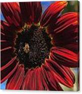 Red Sun Honey Canvas Print