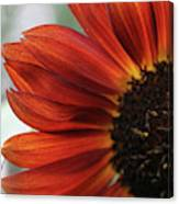 Red Sunflower Close-up Canvas Print