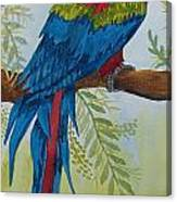 Red Tail Macaw Too Canvas Print