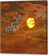 Red Tailed Hawk Canvas Print