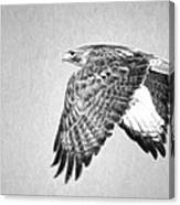 Red Tailed Hawk II Canvas Print