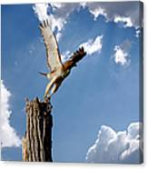 Red-tailed Hawk Perch Series 5 Canvas Print