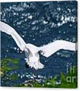 Red Tailed Tropic Bird Canvas Print
