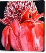 Red Torch Ginger On Black Canvas Print